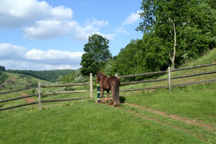 Farm that I sit for while the owners are out of town and one of their walking horses