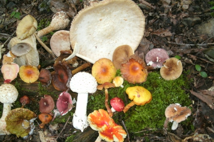 collection of Wild Mushrooms