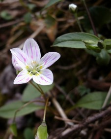 Spring Wild flower