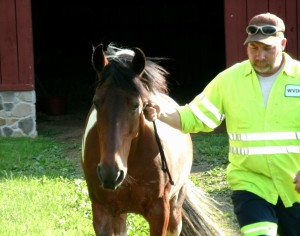 Tom leading horse to pasture