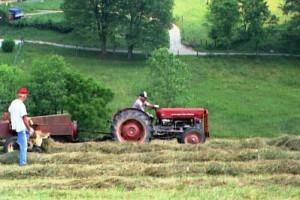 Mr Hicks and Mr Randolph putting up hay