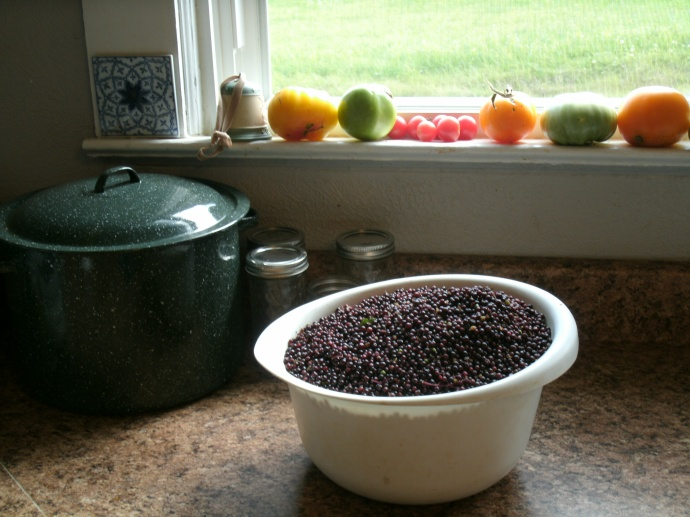 Bowl of fresh picked and cleaned Elderberries