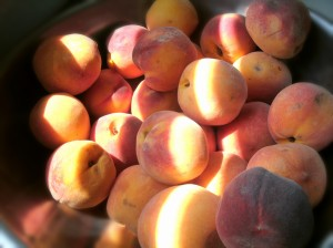 Fresh peaches in bowl