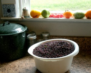 bowl of fresh Elder berries on counter