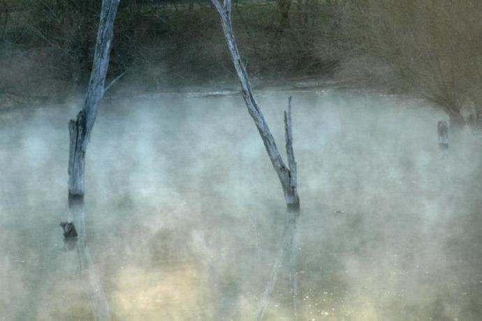 fog and trees stone coal lake West Virginia