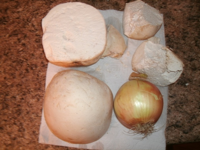 two puffball mushrooms cut in half each one larger then a large onion