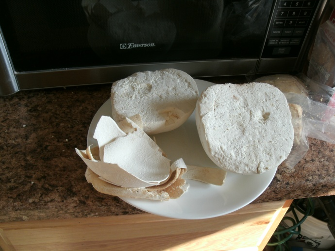 The outer skin removed from a large Puffball mushroom