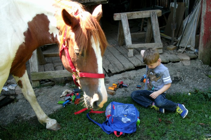 Horse smelling Christopher's toys