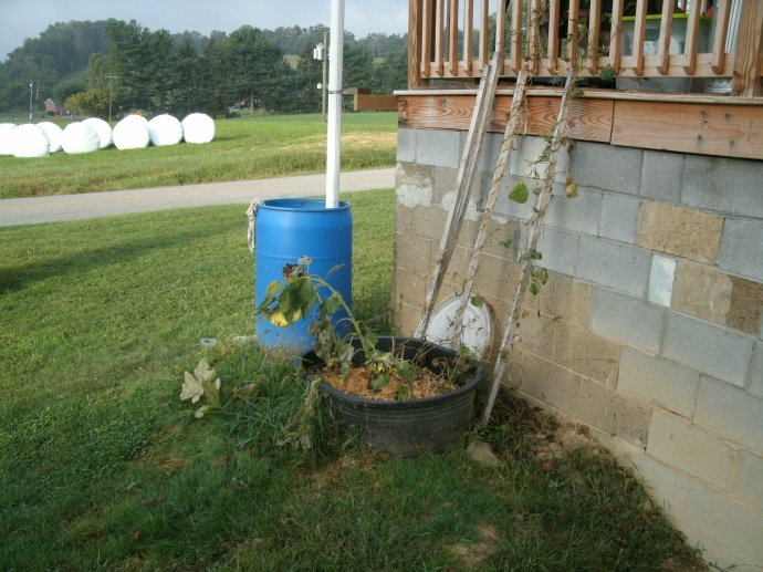 end of summer rain barrel and container garden