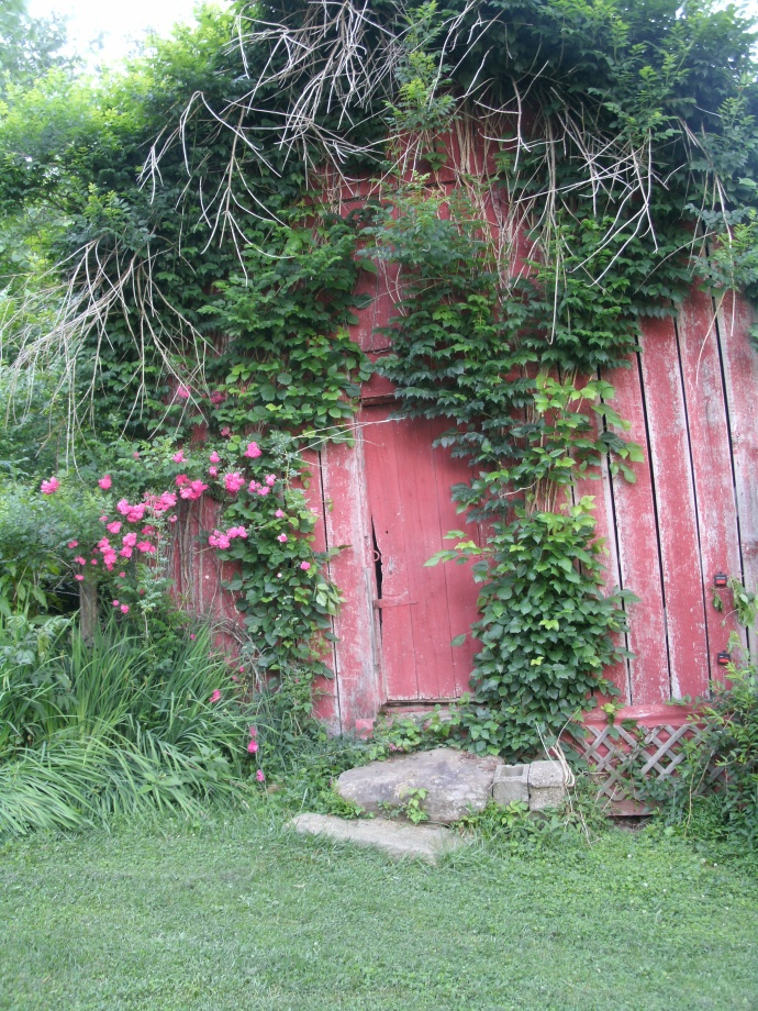 Terry Washborn's shed with wild roses and trumpet vines