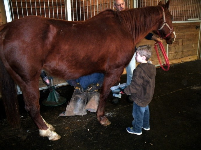 Blind horse getting groomed by Christopher