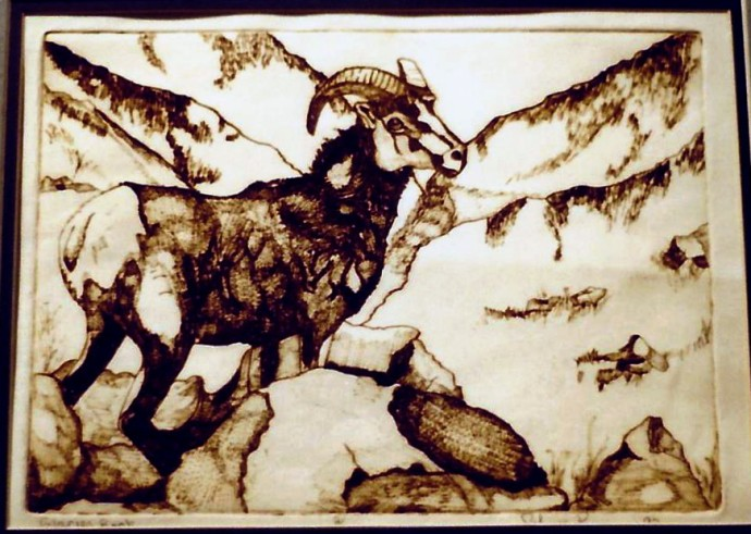 engraving of big horn sheep during last years of collage 1998