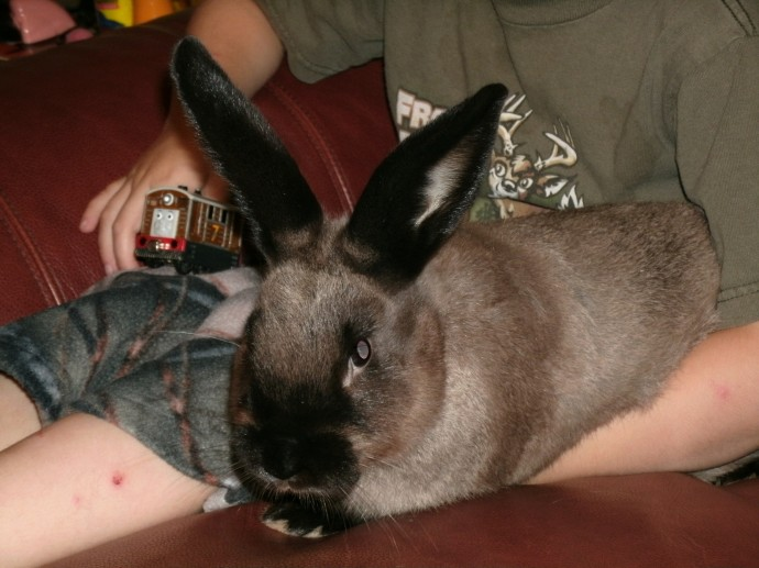 Christopher with new bunny Diesel