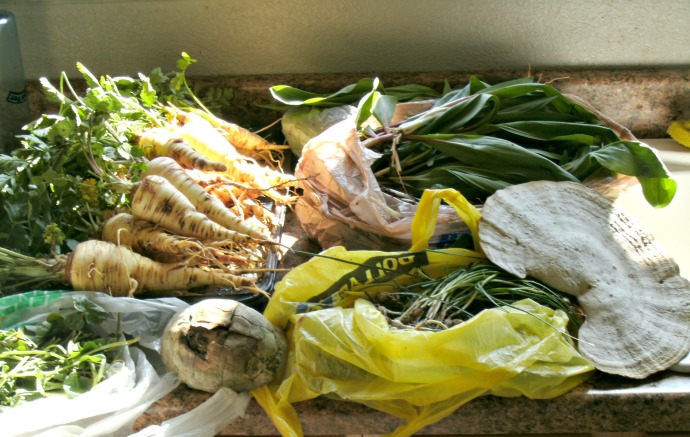 my weekend collection of foraged foods, Ramps, Parsnips, Watercress, Chives, a land turtle shell and a shelf mushroom( not edible)