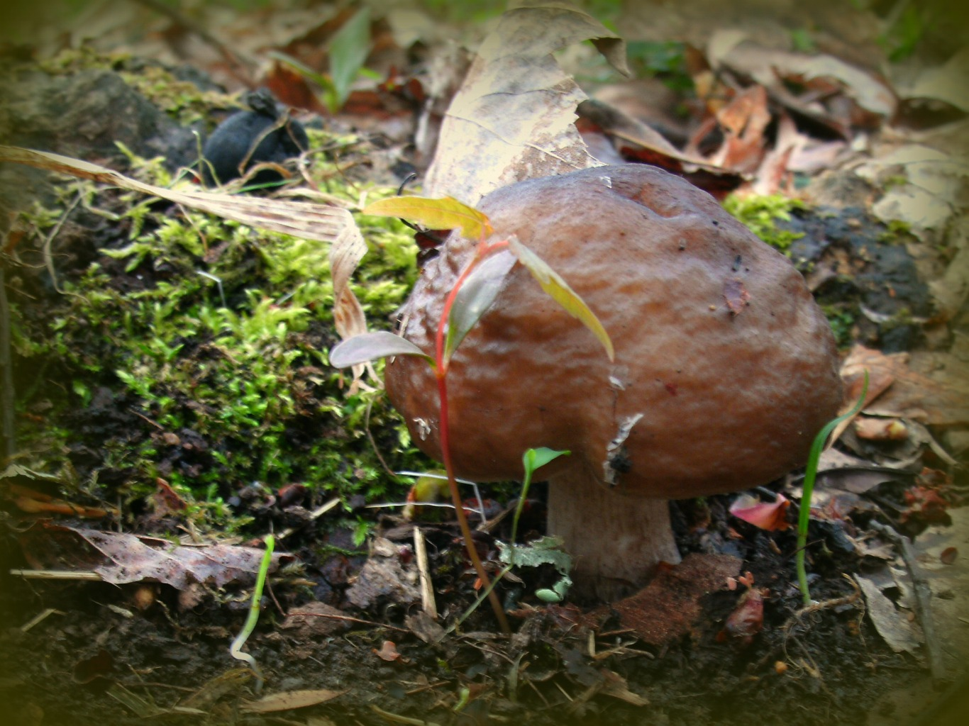 Fairy Mushroom in the woods of West Virginia