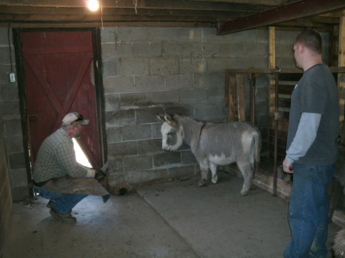 Gab Garvin and Tom working to get to know a Donkey they call Eore.