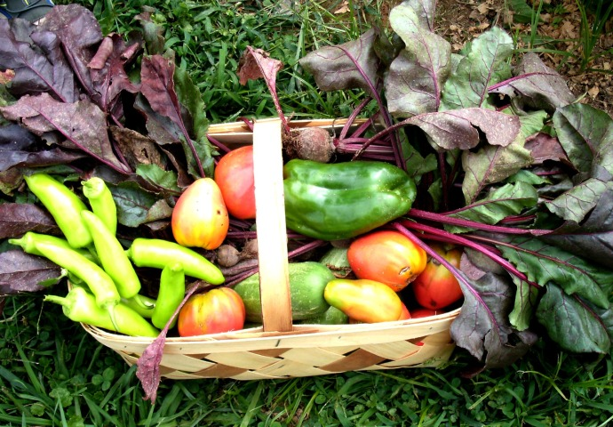Harvest Basket in the garden 2014
