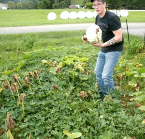 Cody picking Pumpkins in the sweet potato patch