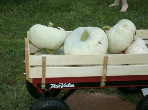 wagon full of white sliver moon pumpkins