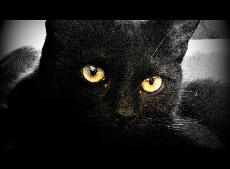 Cats | West Virginia Mountain Mama