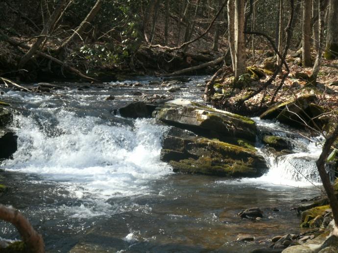 Spring Stream in Pendelton County WV