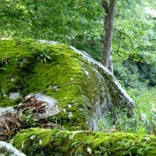 Moss covered stones along the river at Ten Mile WV