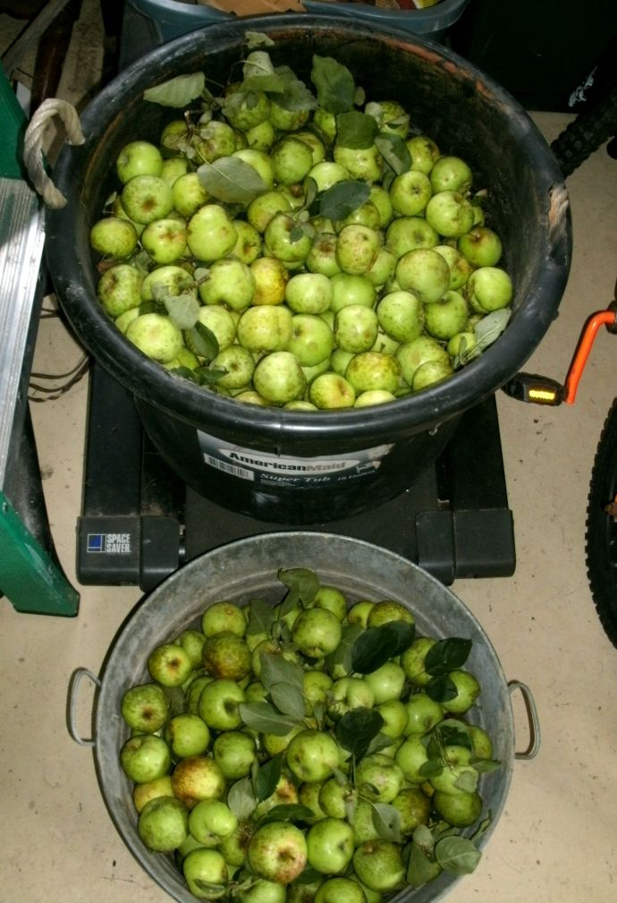one 18 gallon tub and one 8 gallon wash tub full of apples about 70 pounds