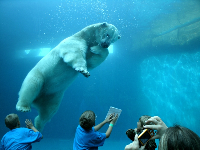 Christopher Powers Playing with Polar Bear at the Pittsburgh Zoo 2015