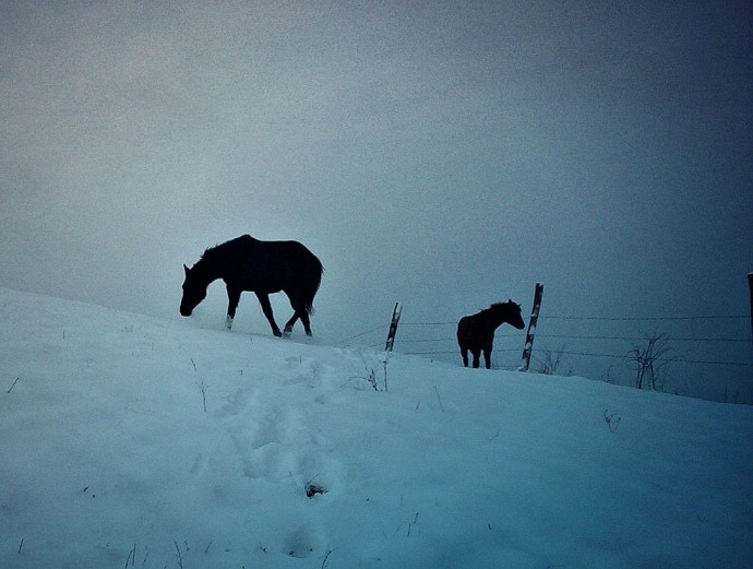 My horses on in the top pasture on a snowy morning.