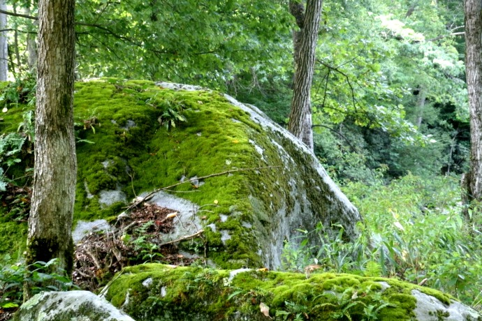 rocks covered in moss by the river in Ten Mile. WV