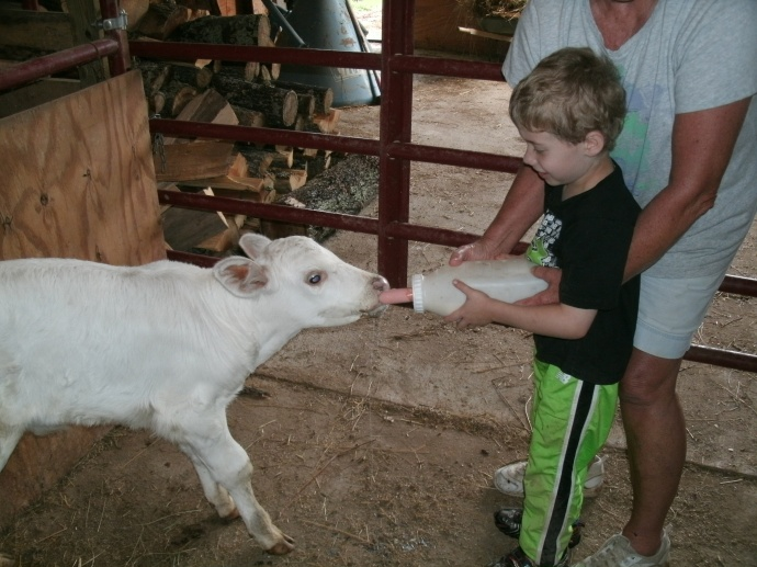 Christopher feeding a 4 day old calf.