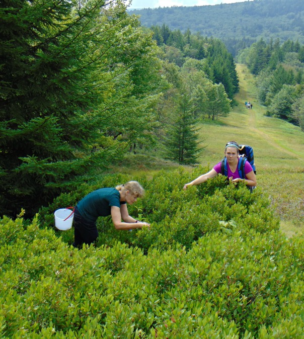 robyn-and-emily-picking-blue-berries-at-cannan-valley