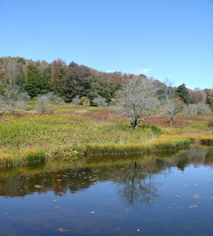 reflection in run off pond at Canaan Valley Wild Life refuge 17.jpg
