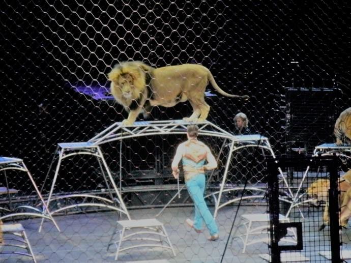 lion tamer.JPG