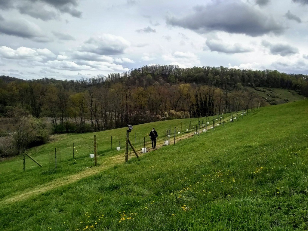 Virginia Shemick checks all the trees in the orchard after planting.